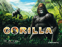 игровой автомат Gorilla